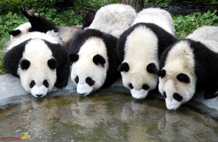 panda-goes-home-08