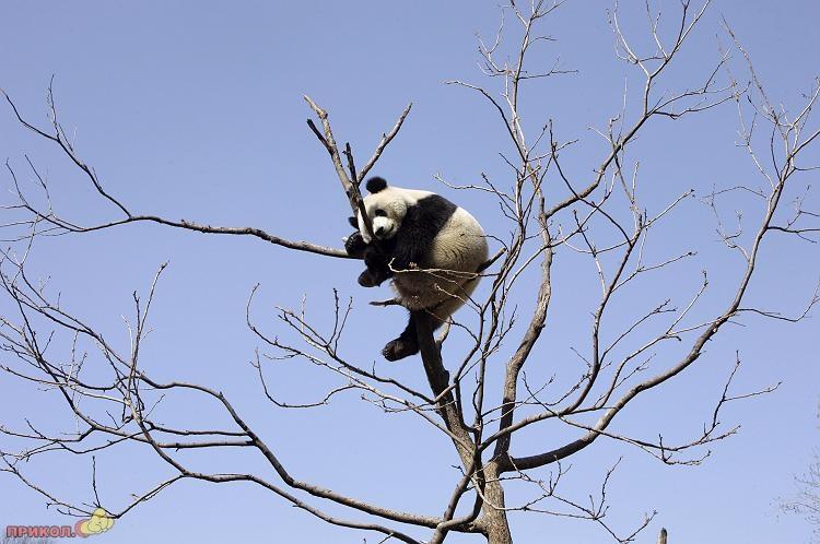 panda-goes-home-09