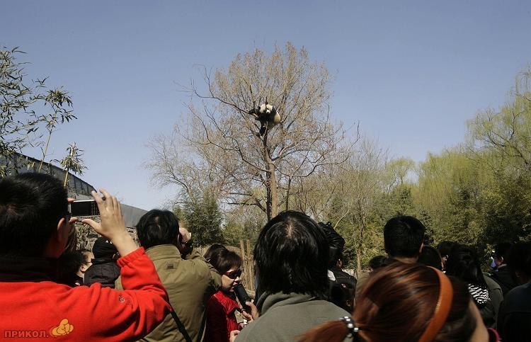 panda-goes-home-10