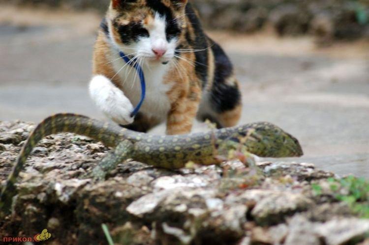 cat-vs-lizard-03
