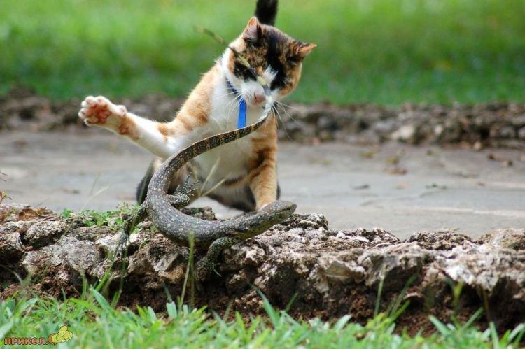 cat-vs-lizard-05