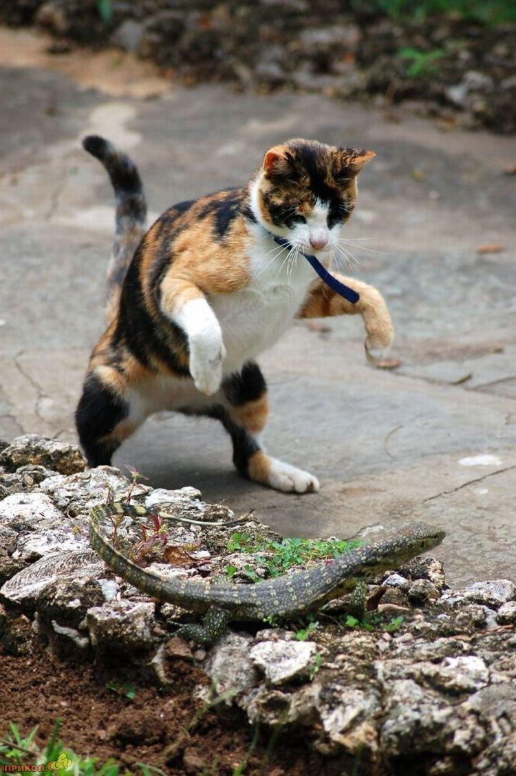 cat-vs-lizard-07