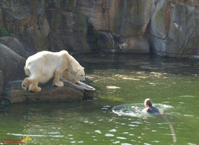polar-bear-attacks-woman-02