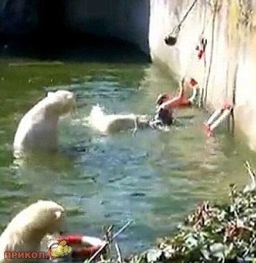 polar-bear-attacks-woman-03