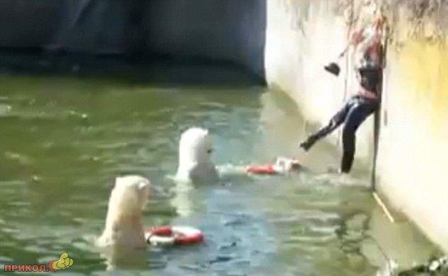 polar-bear-attacks-woman-05