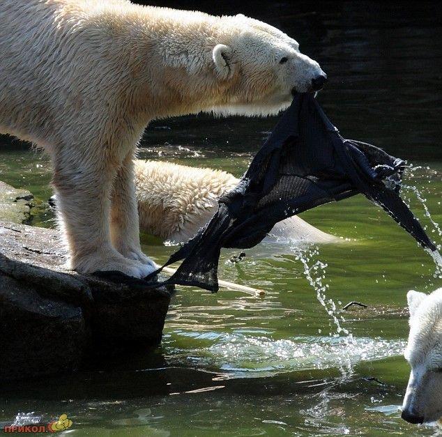 polar-bear-attacks-woman-06