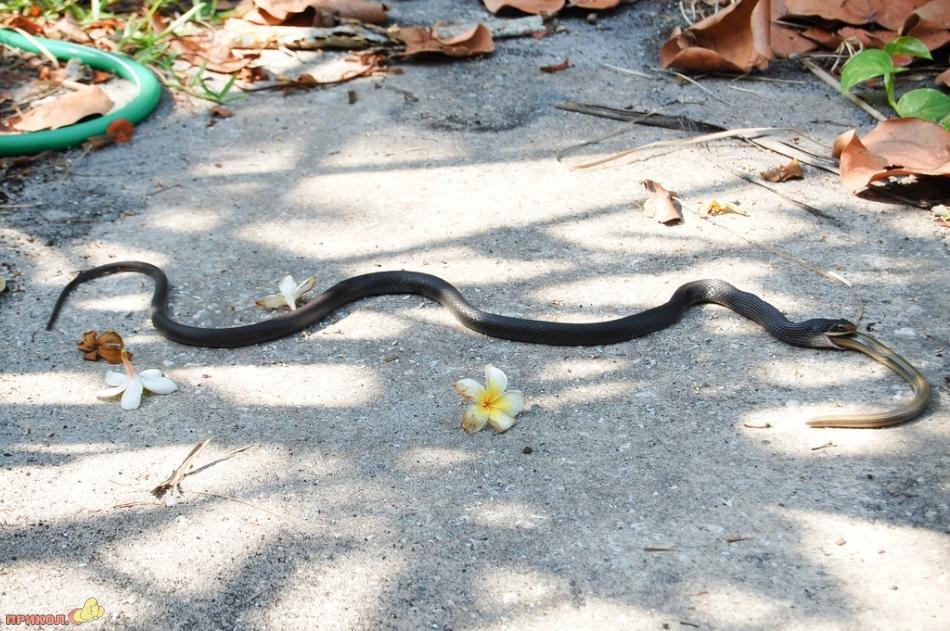 snake-eating-snake-01