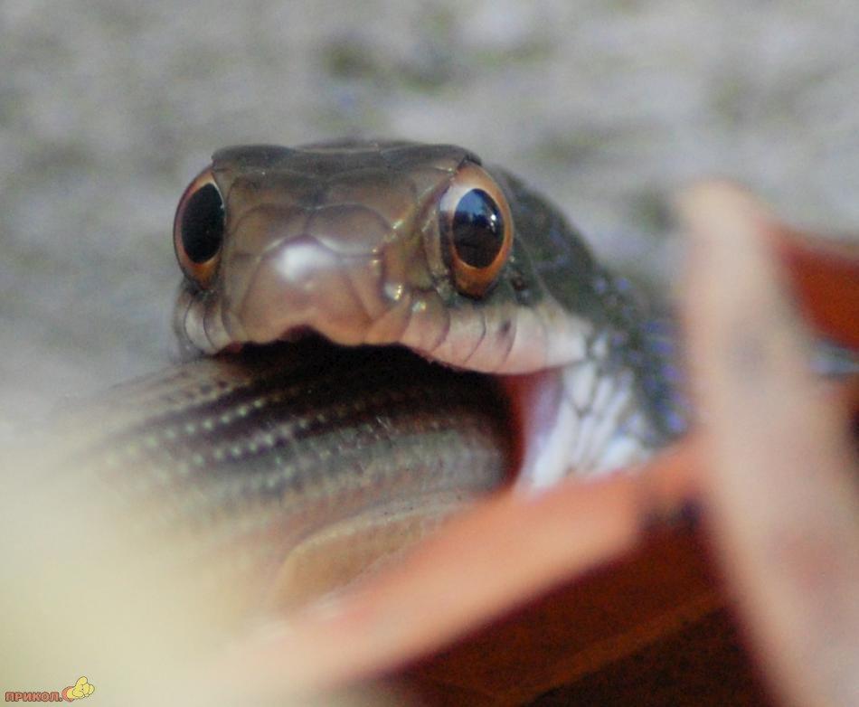 snake-eating-snake-06