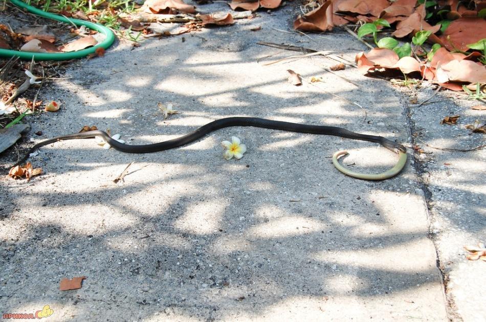 snake-eating-snake-12