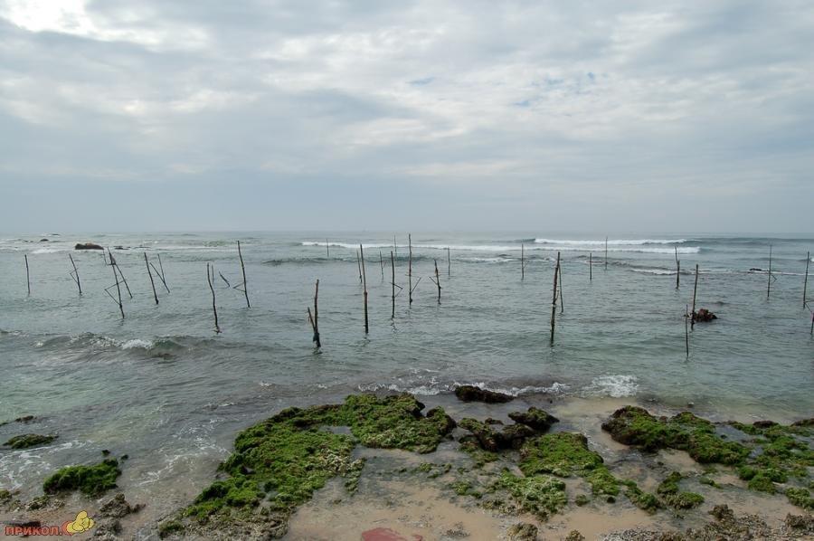 sri-lanka-fishing-11