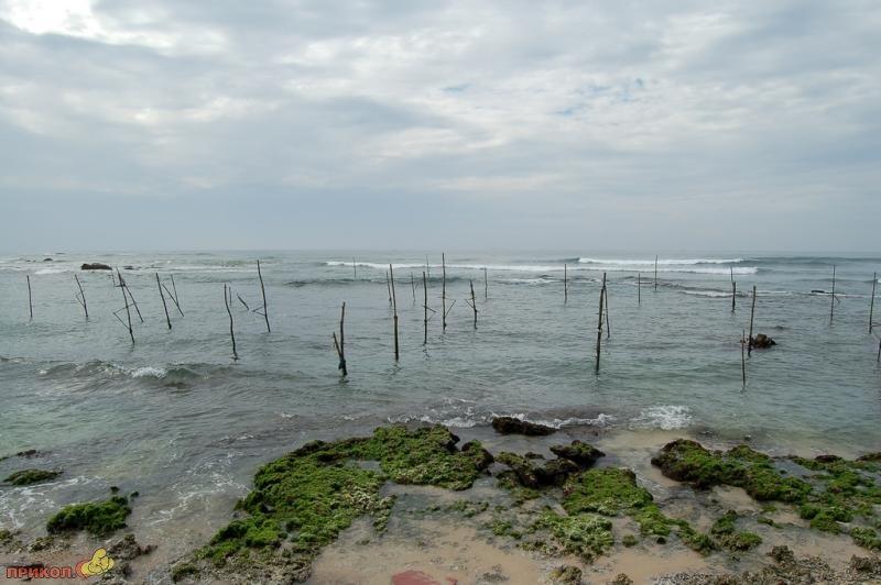 sri-lanka-fishing-12