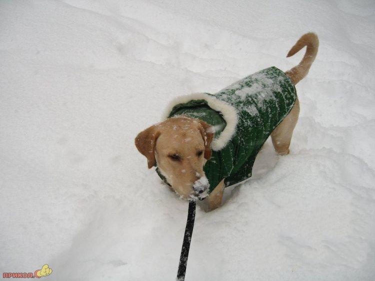 usa-snowfall-march-05