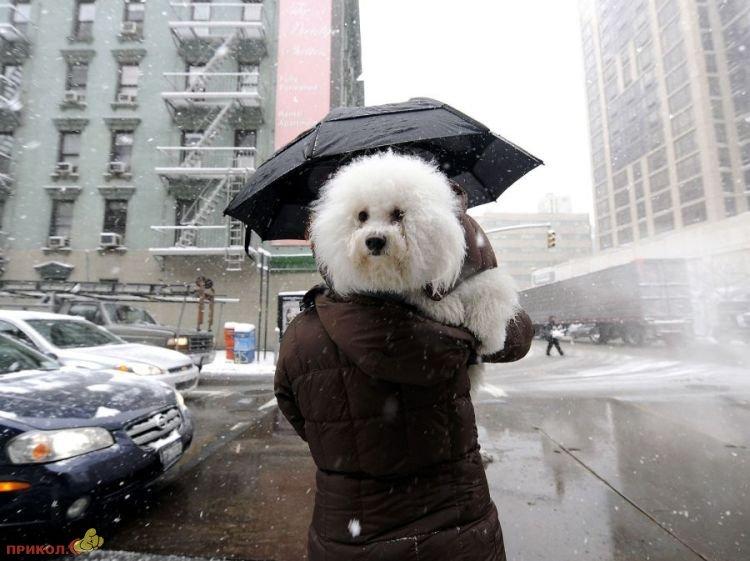 usa-snowfall-march-25