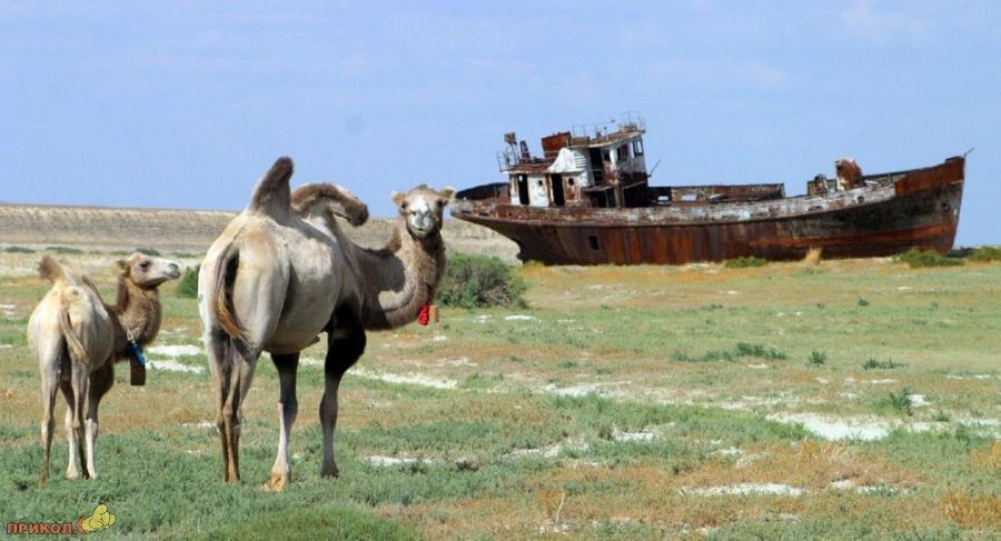 aralskoje-more-11