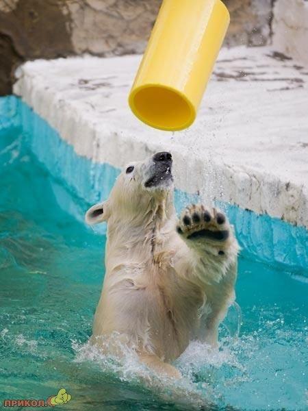 bear-fun-02