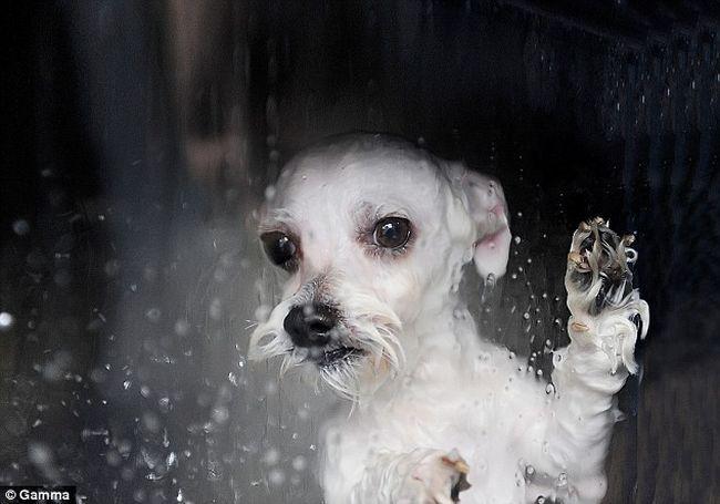 dog-wash-01