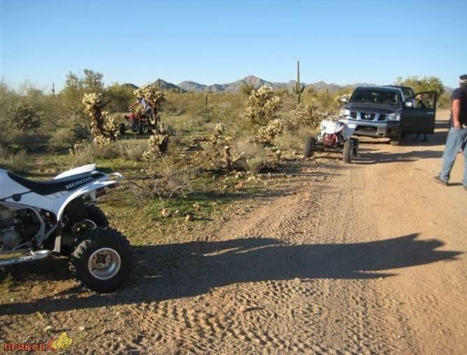 moto-kaktus-04