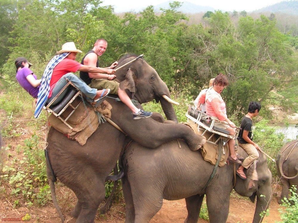 turisti-na-slone-02