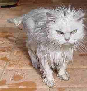 мокрая киска