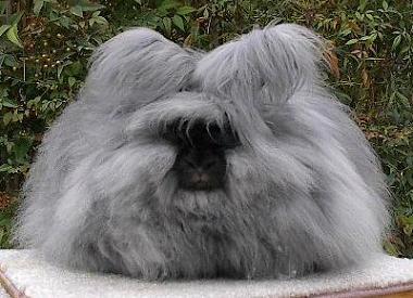 http://www.prikol.ru/wp-content/uploads/2008/06/angora_rabbit.jpg
