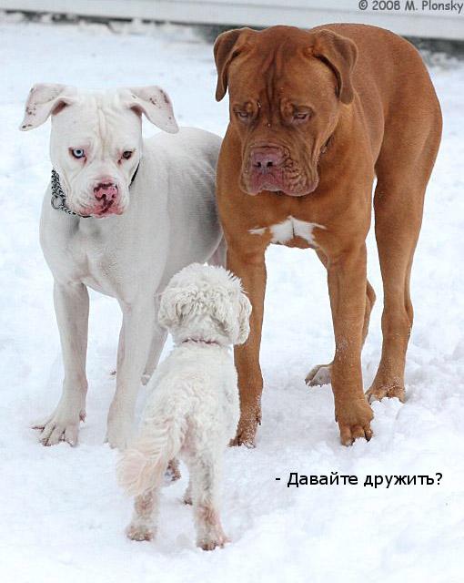 Дружба (23 фото)