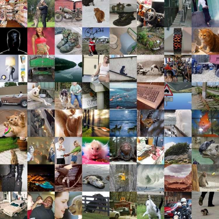 collage1-750.jpg