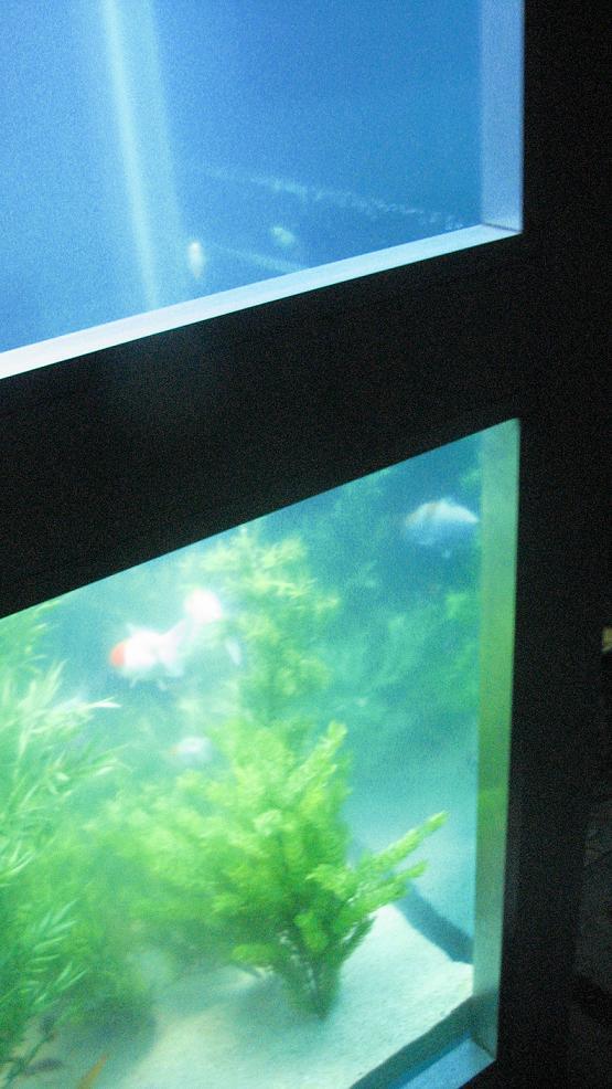 aquarium-phone-09