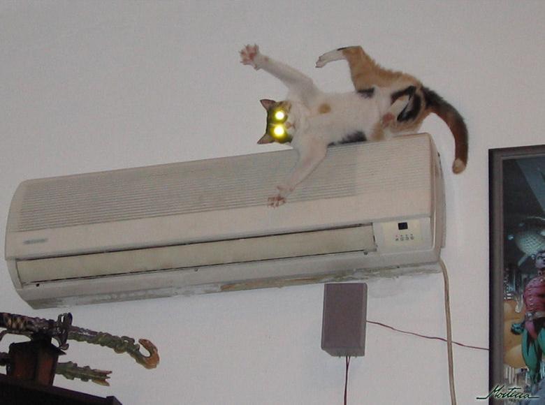 кот спит на кондиционере