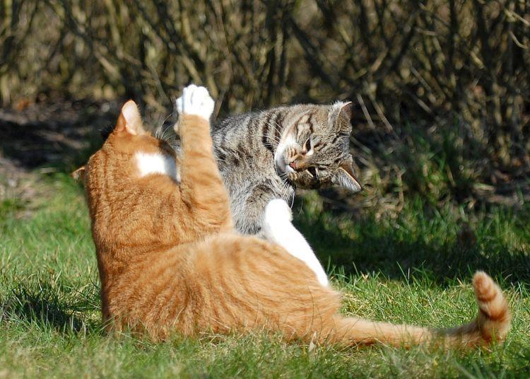 Смешные картинки коты дерутся, новым