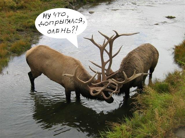 deers_05.jpg
