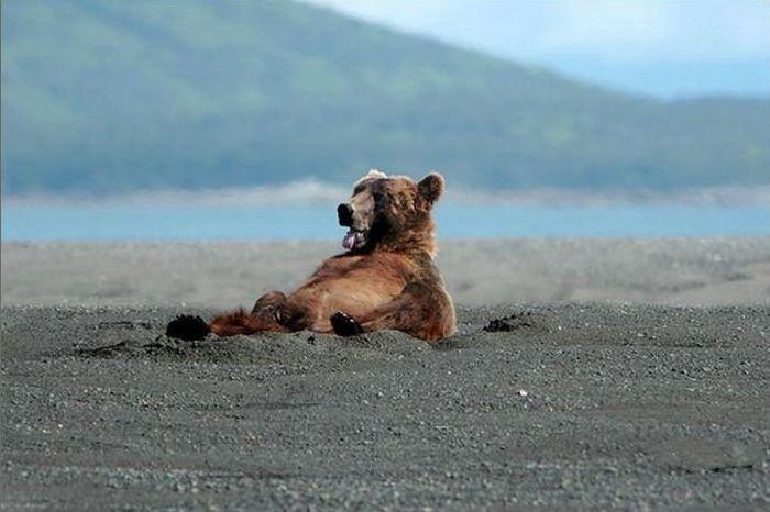 funny-bear-says-hi-02