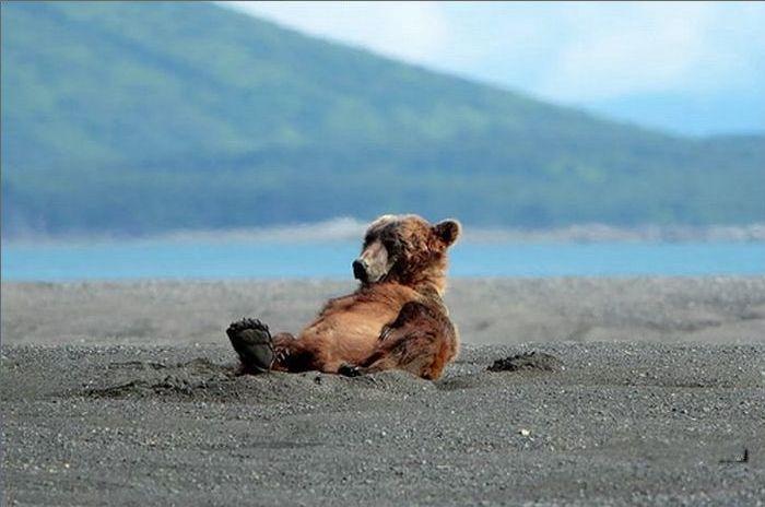 funny-bear-says-hi-03