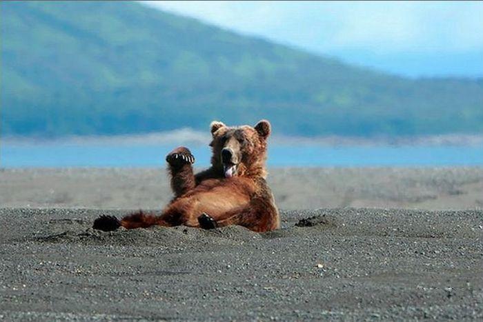 funny-bear-says-hi-04
