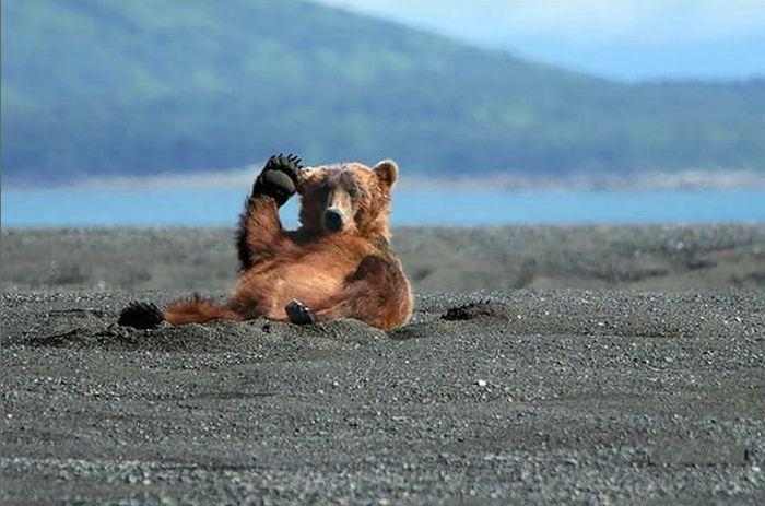 funny-bear-says-hi-05