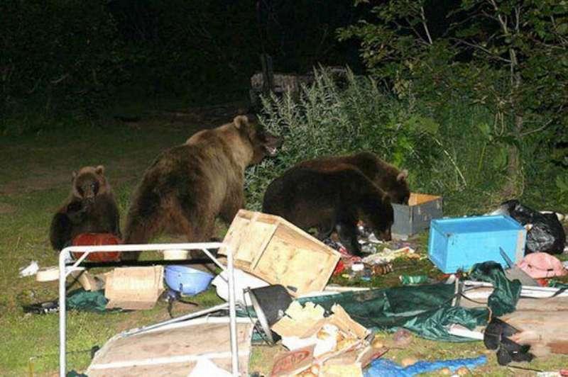 bear-party-02