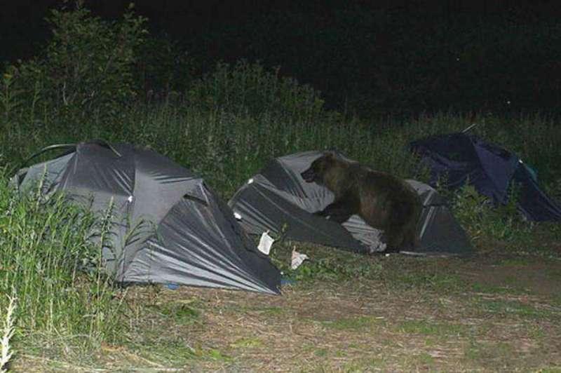 bear-party-03