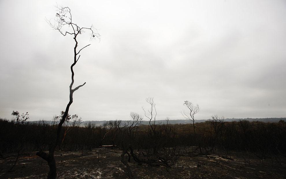 bushfires-in-victoria-australia-04