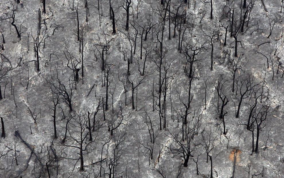 bushfires-in-victoria-australia-15