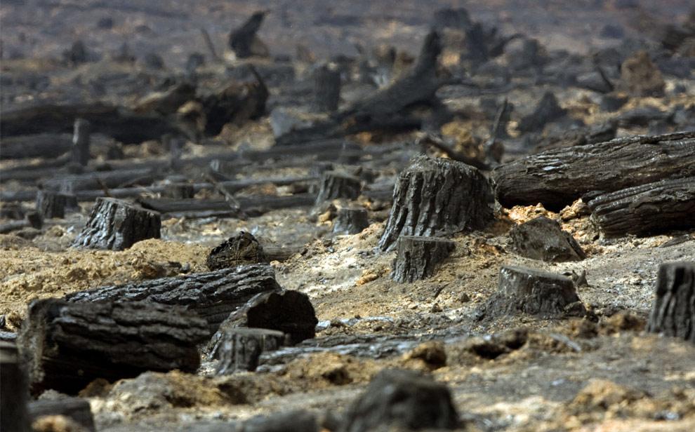 bushfires-in-victoria-australia-20