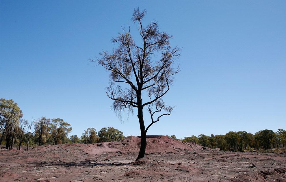 bushfires-in-victoria-australia-28