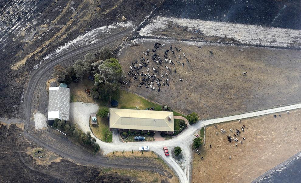 bushfires-in-victoria-australia-32