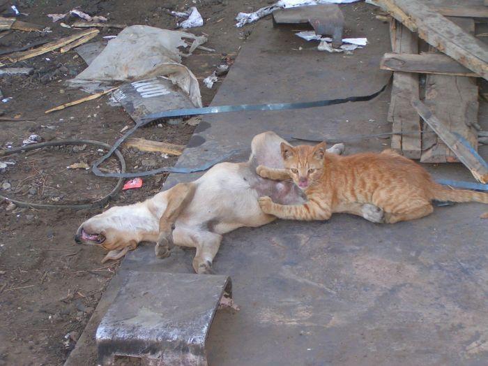 cat-dog-paranormal-03