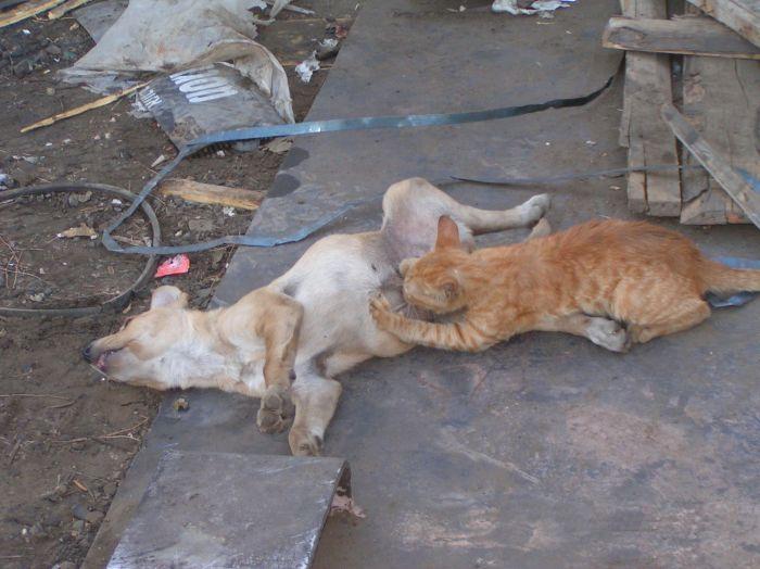 cat-dog-paranormal-04