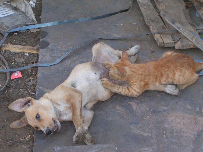 cat-dog-paranormal-05