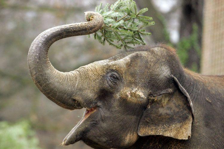 christmas-tree-for-elephants-01