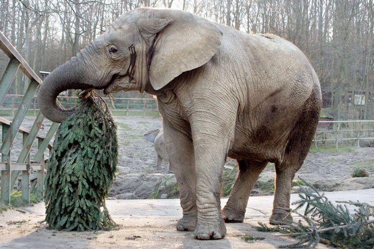 christmas-tree-for-elephants-02