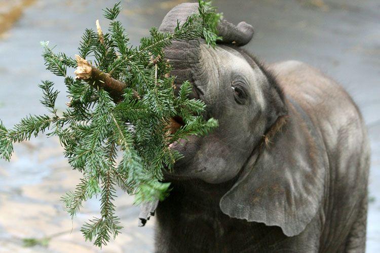 christmas-tree-for-elephants-03