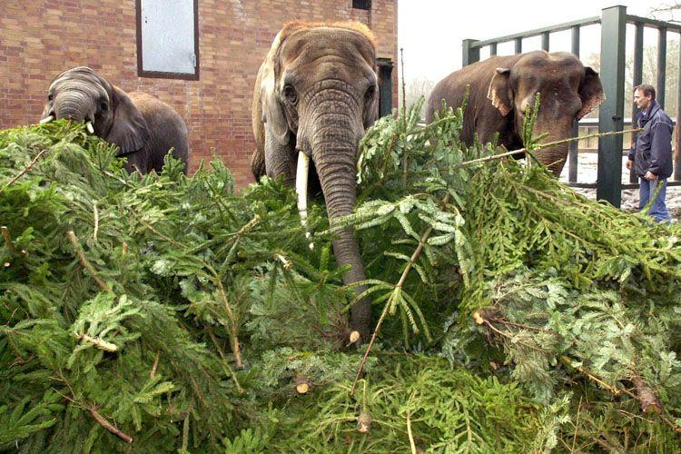christmas-tree-for-elephants-04