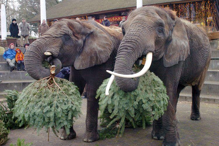 christmas-tree-for-elephants-06