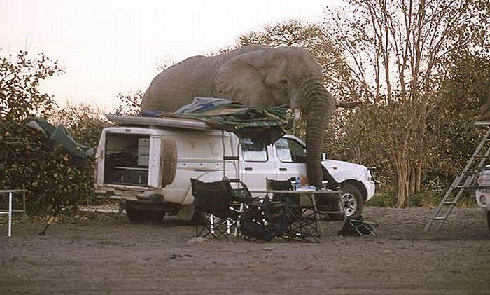 elephant-revision-02